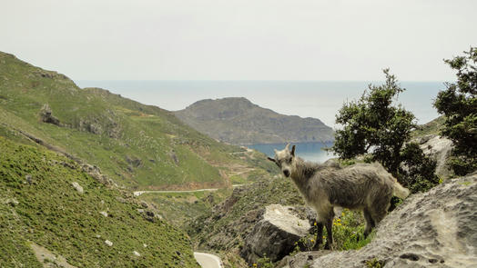 Goats on Cretan Roads - A Story in Pictures